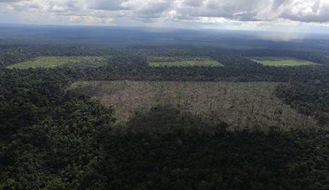 """Le Brésil démantèle un """"gang"""" de déforestation en Amazonie   Le recours aux forêts   Scoop.it"""