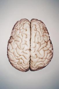 Understanding How the Brain Speaks Two Languages | Bilingualism | Scoop.it