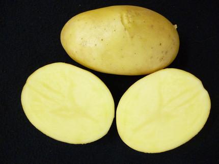 Dos nuevas variedades de patata de gran valor nutricional | Cultivos | Scoop.it