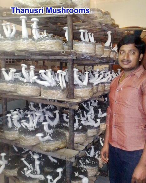 Andhrapradesh, India:   Thansuri Mushrooms is a growing company | Music | Scoop.it