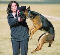 Service utah dog training for the tracking dog | Dog training utah | Scoop.it