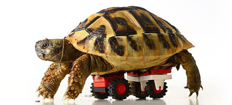 Clever Vet Used Lego To Make A Wheelchair For A Weakened Tortoise | 16s3d: Bestioles, opinions & pétitions | Scoop.it