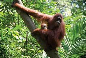 Social and environmental impacts - CHOICE reviews palm oil - CHOICE | Say No To Palm Oil | Scoop.it