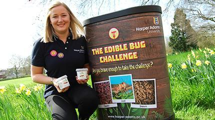 Would you swap steak for insects? Take the Edible Bug Challenge this summer! | Entomophagy: Edible Insects and the Future of Food | Scoop.it