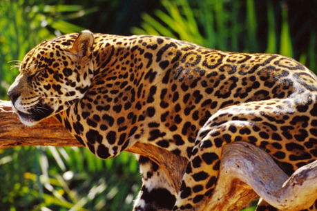 Wildlife of the Amazon - Sky Rainforest Rescue | Rainforest Animals | Scoop.it