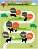 Urgences vétérinaires en image - Blog animaux zoomalia.com | PETS & ANIMAUX | Scoop.it
