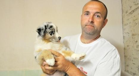Saint-Michel-de-Feins (Mayenne). L'éleveur jugé pour avoir maltraité ses chiens | Services vétérinaires | Scoop.it