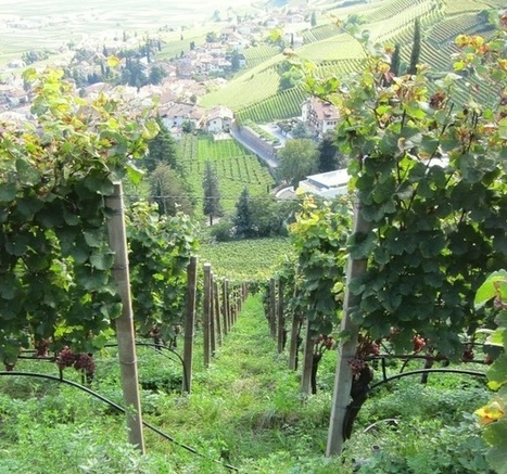 Postcard From Italy: The Wines of Alto Adige - D Magazine   THE COTTAGE COMPANY  & THE FRENCH VINTAGE  COTTAGE   Scoop.it