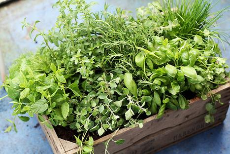 How to Use Fresh Herbs   www.paleomessenger.com   Scoop.it