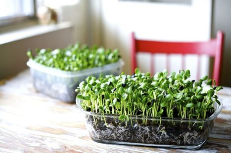 Free Microgreens Workshop! - Craving Greens   Vertical Farm - Food Factory   Scoop.it