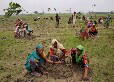 India state aims to plant a record 50 million trees in a day | Our Evolving Earth | Scoop.it