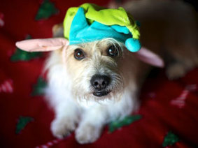 Holiday Photo Cards: 10 Tips for Pet Photos - Petside | Family Pets | Scoop.it