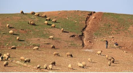 La propagation de la Peste des petits ruminants renforce les efforts d'éradication: OIE - World Organisation for Animal Health   SCIENCES DE L'ANIMAL   Scoop.it