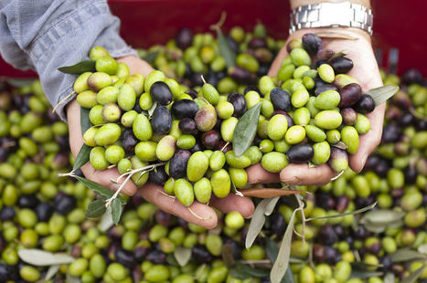 Counterfeiters Have Been Painting Expired Olives to Sell Them | News we like | Scoop.it