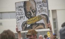 Tiró la toalla: Monsanto renuncia en su intento de introducir plantas transgénicas en Europa   biología   Scoop.it