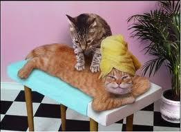 katten welnes   KAP1A7Lara   Scoop.it
