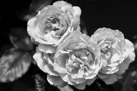 [tutoriel] Comment convertir une photo couleur en noir et blanc en ligne | Retouches et effets photos en ligne | Scoop.it