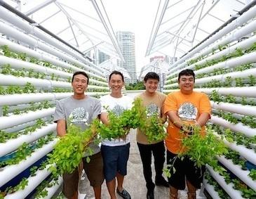 Singapore: Comcrop pioneers urban rooftop farming — City Farmer ... | Cityfarming, Vertical Farming | Scoop.it