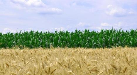 Expect More Than Standard Antitrust Scrutiny For ChemChina/Syngenta Deal | Grain du Coteau : News ( corn maize ethanol DDG soybean soymeal wheat livestock beef pigs canadian dollar) | Scoop.it