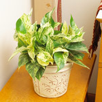 24 of the Easiest Houseplants You Can Grow   100 Acre Wood   Scoop.it