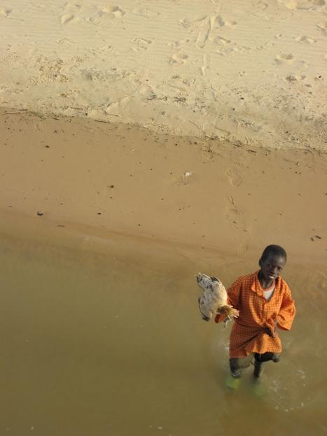 Le poulet en Afrique de l'Ouest | 7 milliards de voisins | Scoop.it