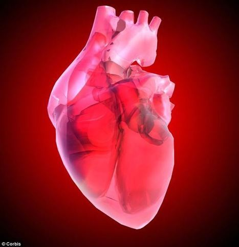 Is this the future of organ donation? Scientists grow beating mouse heart made from HUMAN stem cells | Stem Cells & Tissue Engineering | Scoop.it