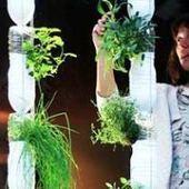 Elle se nourrit grâce à son jardin planté dans son minuscule appartement de New-York! | Vertical garden | Scoop.it
