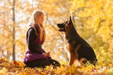 10 Most Loyal Dog Breeds - Pet360 Pet Parenting Simplified | Dog News | Scoop.it