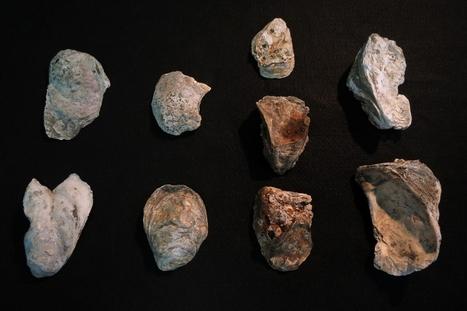 Hallan vestigios de ocupación humana de hace 4.000 años en las obras del metro de Río de Janeiro | ArqueoNet | Scoop.it