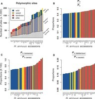 The Accumulation of Deleterious Mutations as a Consequence of Domestication and Improvement in Sunflowers and Other Compositae Crops | plant cell genetics | Scoop.it