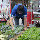Urban Gardening and Automation   Sustainable Cities Collective   Vertical Farm - Food Factory   Scoop.it