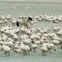 Study Maps Likely Wildlife Migration Corridors as Climate Warms | CleanTechies Blog - CleanTechies.com | Conservation Biology, Genetics and Ecology | Scoop.it