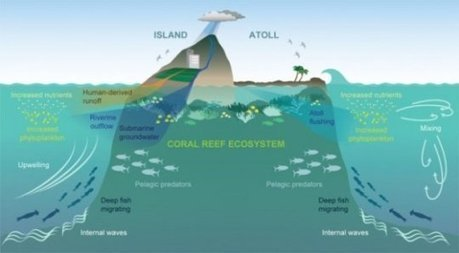 Ocean oases: How islands support more sea-life: Why seas surrounding islands are more productive: 60 year-old theory proven | IELTS, ESP, EAP and CALL | Scoop.it
