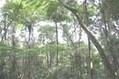 MATA ATLÂNTICA - características, fauna, flora, animais, vegetação, extinção | projeto scoopit terceiro trimestre | Scoop.it