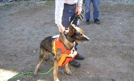 Dogs, robot snakes team for search-and-rescue missions | Robots and Robotics | Scoop.it