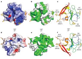 Structure of the core ectodomain of the hepatitis C virus envelope glycoprotein 2 | Hepatitis C New Drugs Review | Scoop.it