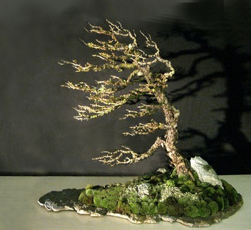 Mister Windswept Bonsai | Container Gardening | Scoop.it