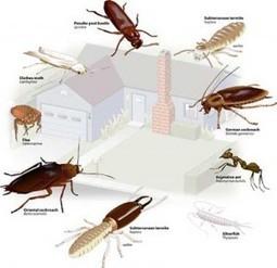 شركة مكافحة حشرات بالرياض | 056788709 شركة تنظيف بالرياض | Scoop.it