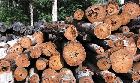 Russia Is Running Out of Forest | Timberland Investment | Scoop.it