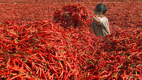 The highly unusual company behind Sriracha, the world's coolest hot sauce | startups | Scoop.it