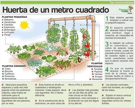 Cómo crear una huerta en un metro cuadrado #infografía   Conciencia Eco   Lombrihumus de Pirineo   Scoop.it
