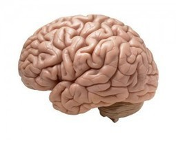 Your brain is not that big, get over it | Social Foraging | Scoop.it