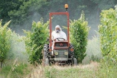 Cognac : l'impact des pesticides sur la santé passé au peigne fin   Actualités du Cognac   Scoop.it