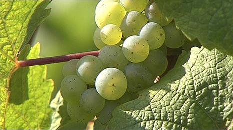 Les prix du vin français flambent : +18% en un an | Autour du vin | Scoop.it