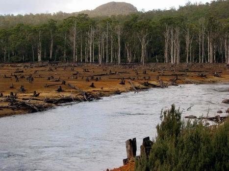 Silence, on coupe : cette forêt tasmanienne qu'on assassine | The Blog's Revue by OlivierSC | Scoop.it