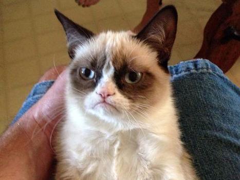 Grumpy Cat's sour face is sweet viral success - Today.com (blog)   celebrity pets   Scoop.it