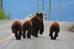 New research will seek alternatives to wild animal culls | UTS News Room | Animal Cruelty | Scoop.it