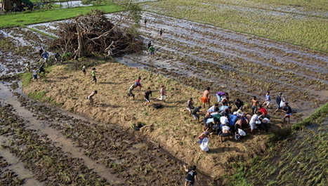 Asia-Pacific Analysis: Climate change and agriculture | CGIAR Climate in the News | Scoop.it