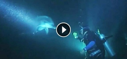 Injured Dolphin Approached Divers For Help. Nothing Could Prepare Them For What They Saw | All about water, the oceans, environmental issues | Scoop.it