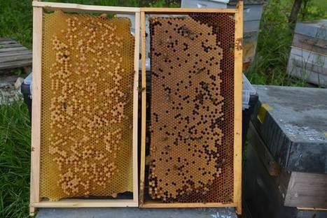 Une apiculture professionnelle sans cire gaufrée | apiculture 2.0 | Scoop.it